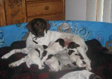 Crow Creek's Annabelle and pups